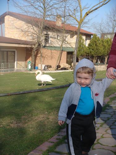 Cuhuriyetköy Legend Otel'in bahçesindeki hayvanlar arasında dolaşırken