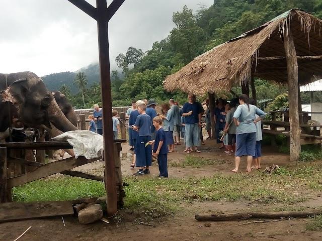 Elephant Camp Panda Tour