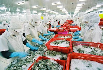 Đơn hàng chế biến thủy sản cần 6 nam thực tập sinh làm việc tại Hiroshima Nhật Bản tháng 05/2016
