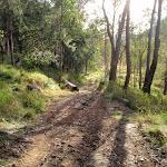 trail leading down to Watagan creek road (59339)