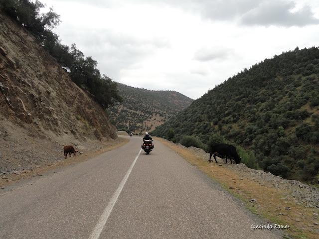 Marrocos 2012 - O regresso! - Página 4 DSC04827