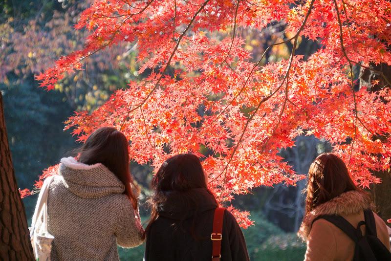 新宿御苑 紅葉 写真23