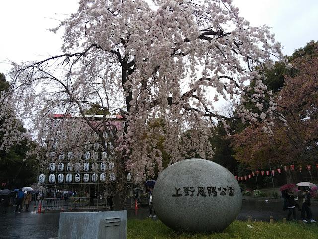 【2015 花見】上野恩賜公園で19歳女子大生とお花見。