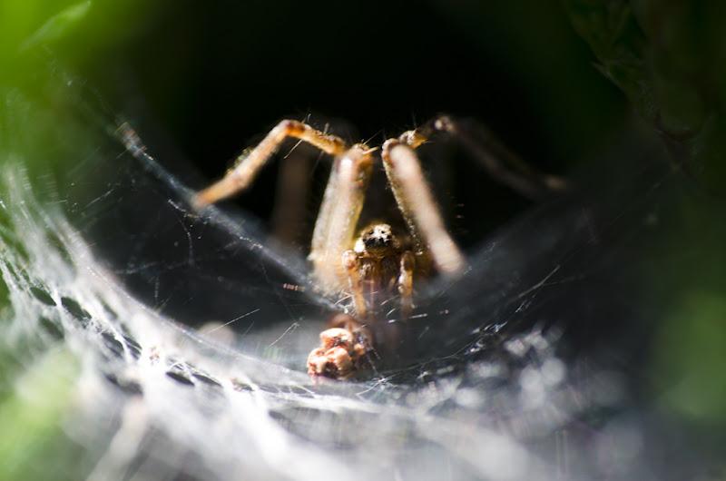 l'araignée étrange et sa toile... 20110828_01_arachnide_DSC4915
