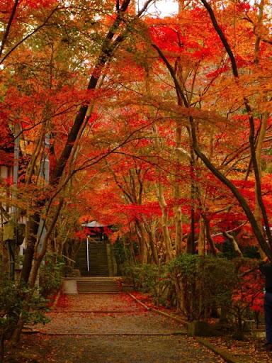 LeoPanda旅をする: 静かな紅葉 ...