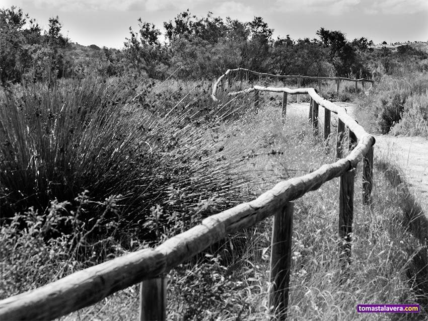 Nikon D5100, 55-200 mm, Paisajes, Blanco y negro, Naturaleza, Clot de Galvany, Elche, Vallada,