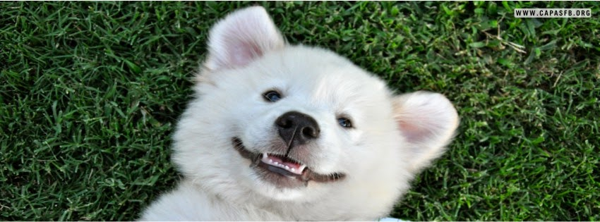 Capas para Facebook Cachorro Feliz