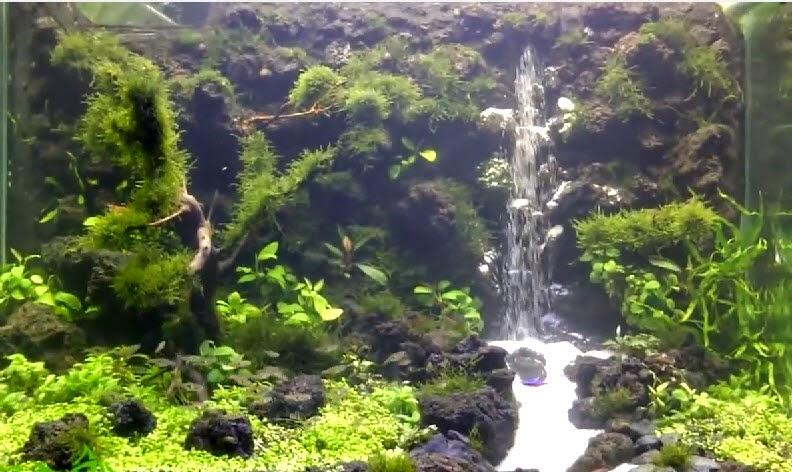 Hồ thủy sinh trọn bộ suối thác 2