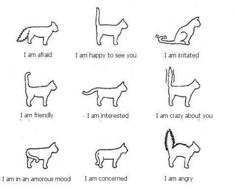 Cat Emotions Guide