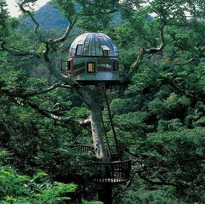 منازل فوق الأشجار-غرائب و عجائب-منتهى