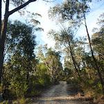 Perimeter Trail near Terrey Hills (307790)