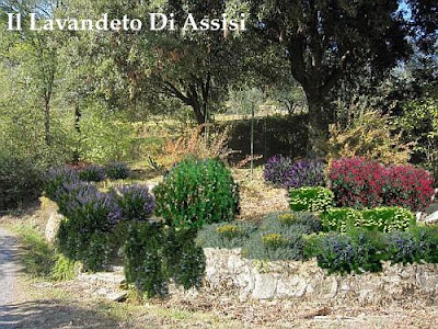 Progetti giardini online gratis progetti giardini privati for Sassi per fioriere