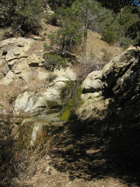 little waterfall coming down over the trail