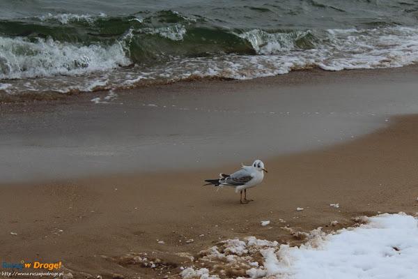 nieuczesana mewia modelka na plaży