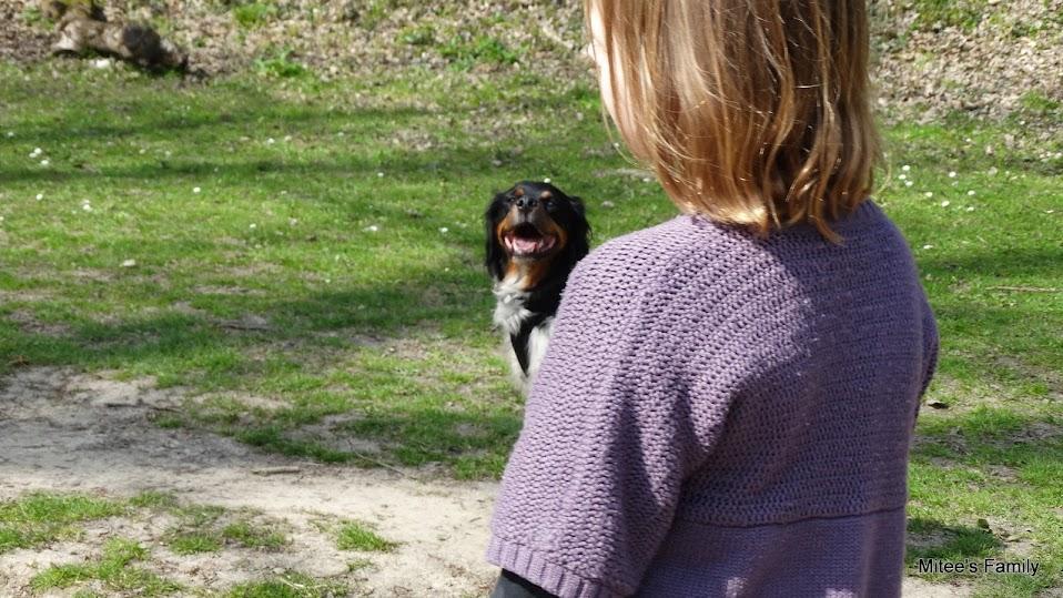 Balades canines en Nord (59)/Pas de Calais (62) - Boulogne-sur-Mer, Calais et Lille - Page 4 DSC01890
