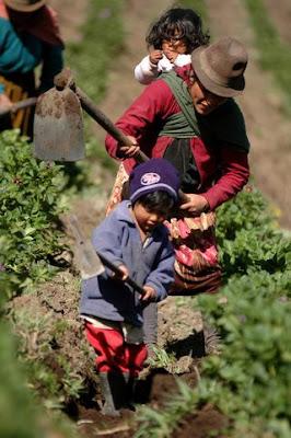 ¿Cuánto le cuesta a Sudamérica alimentar al mundo?
