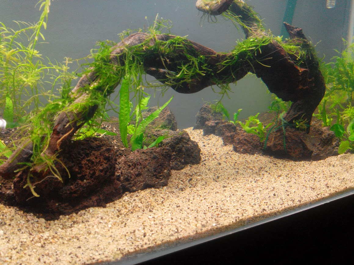 200l aquascaping IMG_20131202_191144