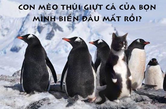 Ảnh chế về Mèo