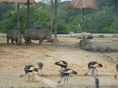 Safari World - Safari Park Bangkok Photo 7