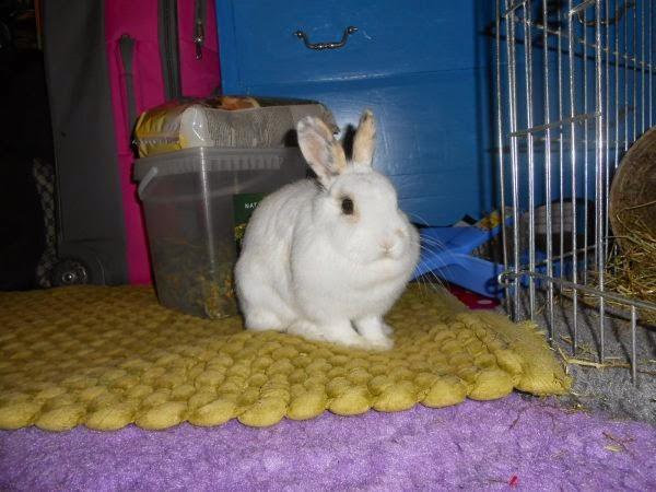 Mirana, lapine blanche-[adoptée] Mirana4-70b82