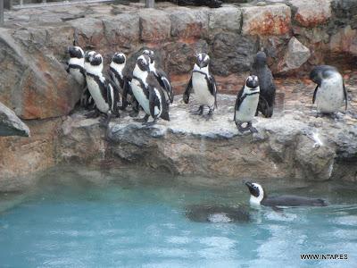 Pingüinos en La Magdalena
