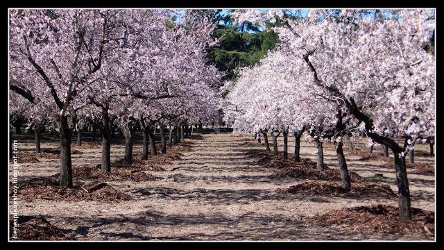 La Quinta de los Molinos en flor