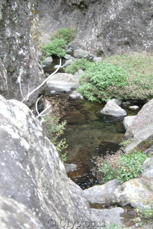 Orchidées in situ, sur l'ile de la Réunion IMG_2232