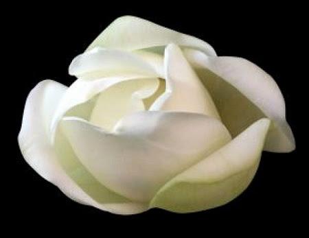 La flor de Amate