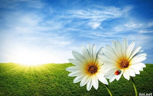 ảnh hoa trong nắng xuân