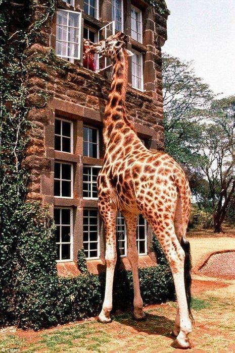 vintage fun girafe