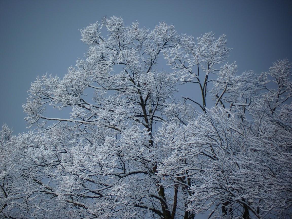 vague de froid hiver france