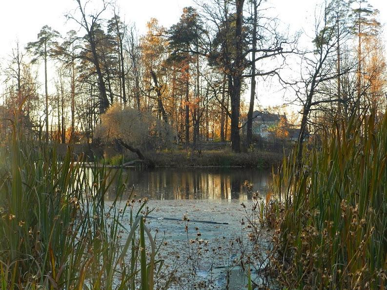 Фото дня - осень в Челобитьево СВАО