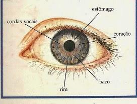 lh4.googleusercontent.com/-vfEZZSVAUfk/VRh-VwgaCgI/AAAAAAAABzU/81DJgKvgwdU/w272-h207-no/iridologia%2BOlho%2Bbasico%2B-%2BC%C3%B3pia.jpg