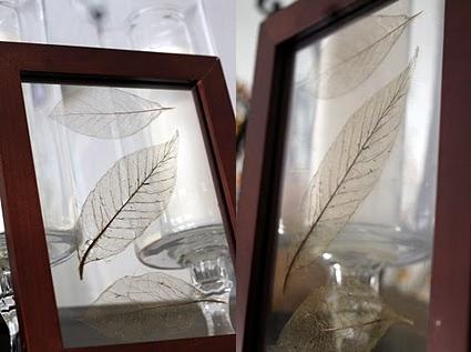 Como hacer hojas de arbol trasparentes (esqueletos de hojas)