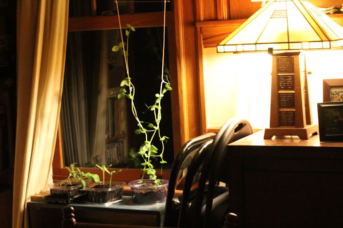 a light on a side table and a pea plant
