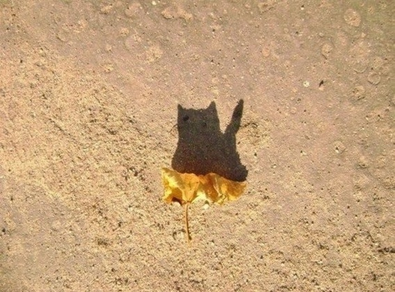 Leaf With A Cat Shadow