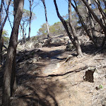 Track to Bournda Lagoon Lookout (105616)