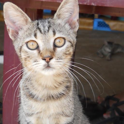 Julie Adams (Skiathoscats)