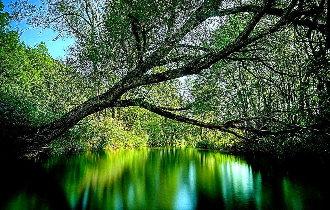 3D Nature Wallpaper Desktop For Windows 7  Wallpaper