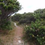Banksia bush beside bush (107329)