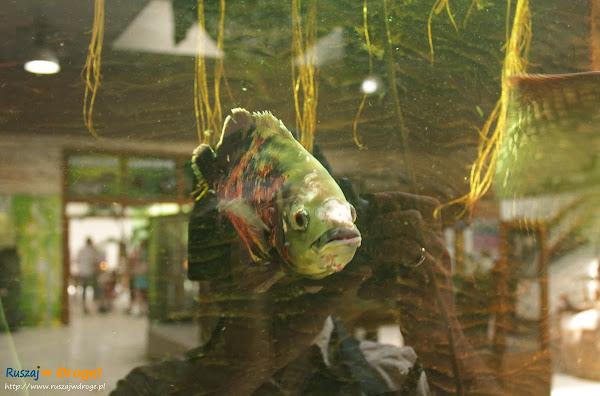 Tuchlino Park Egzotycznych Zwierzaków - ryby