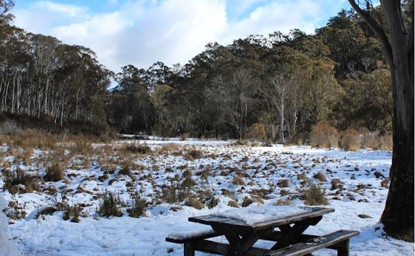corin snow