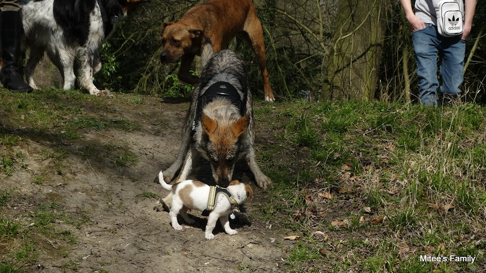 Balades canines en Nord (59)/Pas de Calais (62) - Boulogne-sur-Mer, Calais et Lille - Page 4 DSC01847
