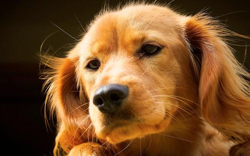 Cute Lovely Dog 2