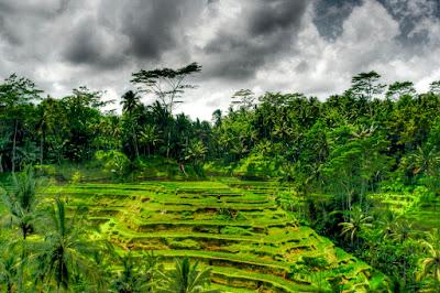 Des rizières en terrasses (photo HDR)