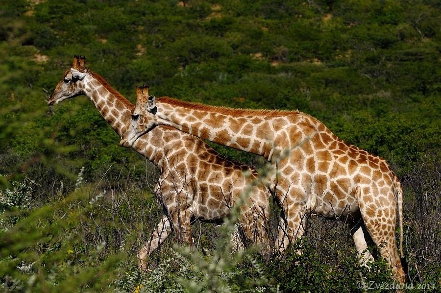 Namibia+2014_091.JPG