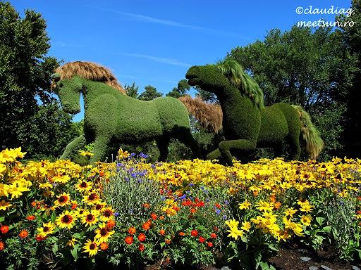 Cai din plante #Mosaiculture