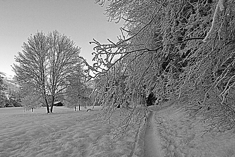 Un petit résumé de l'hiver... P1169189