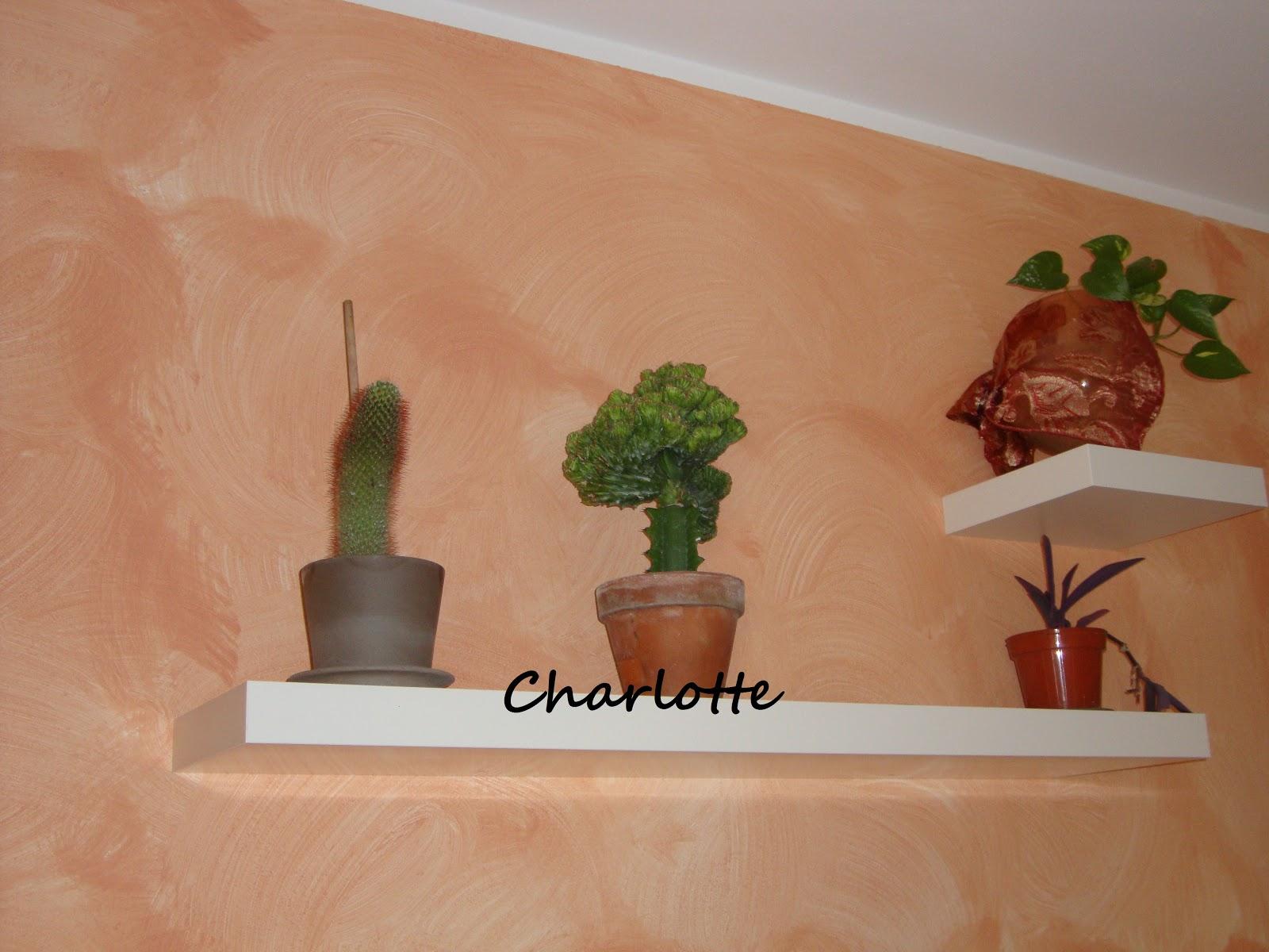 Gli hobbies di charlotte le mie piante