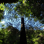Tree fern in Grand Canyon (51812)